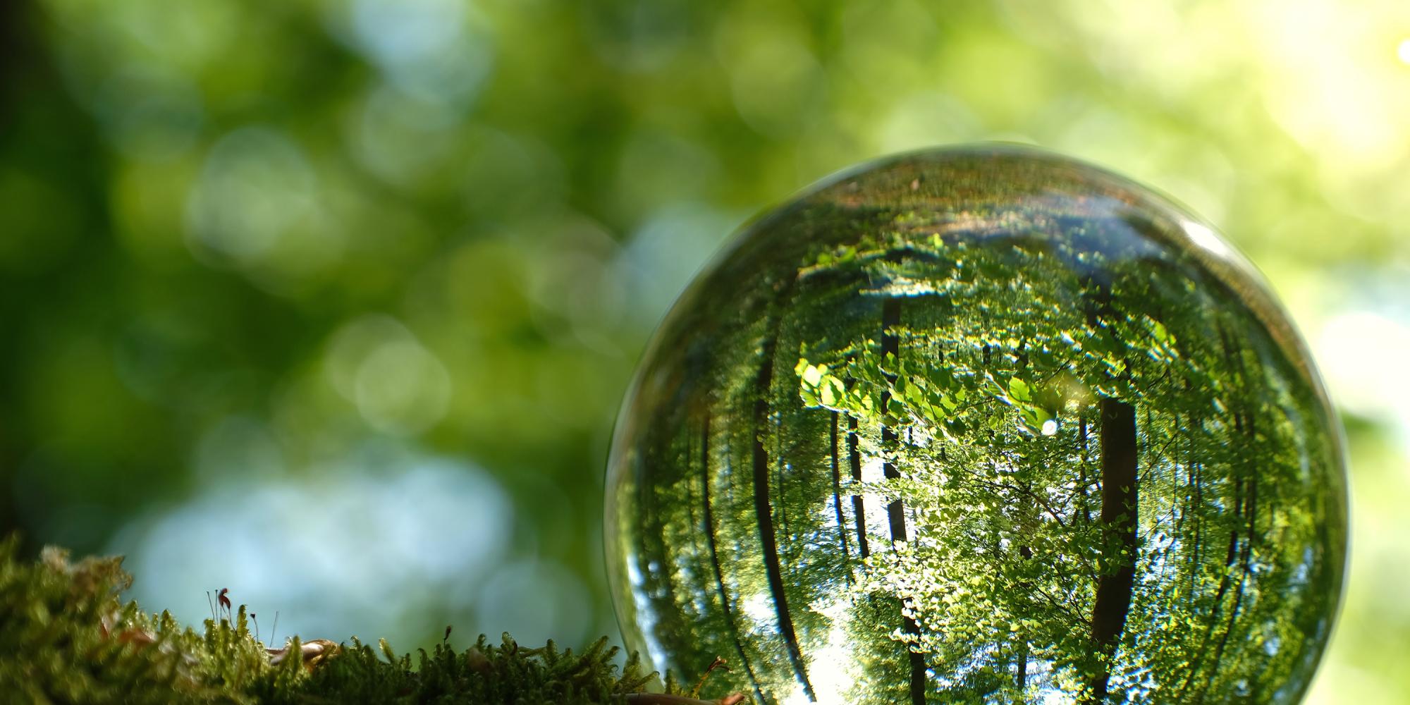Glaskugel im Wald, grün